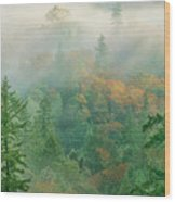 Foggy Morning In Humbolt County California Wood Print