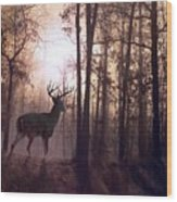 Foggy Morning In Missouri Wood Print