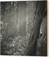 Foggy Morning In The Woods Wood Print