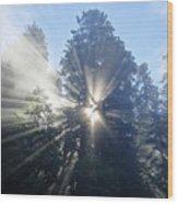 Foggy Redwood Sunrise Wood Print