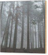 Foggy Sequoia National Park Wood Print