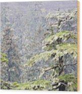 Foggy Tongass Rain Forest Wood Print