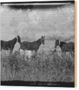 Horse Trio In Morning Fog Wood Print