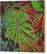 Foliage Abstract 3698 Wood Print