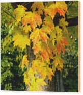 Foliage Fall Wood Print