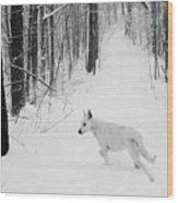 Following Ella Wood Print by Cheryl Helms