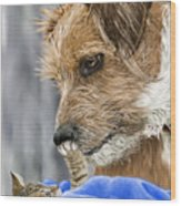 Friends of Norfolk Animal Care Center  Wood Print