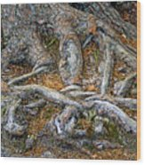 Foot Of The Tree Wood Print