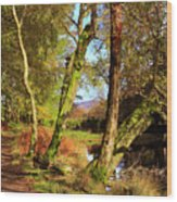 Footpath At The Edge Of Lantys Tarn In The Lake District Cumbria Wood Print