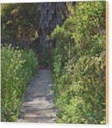 Footpath In Peters Canyon I Wood Print