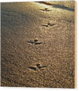 Footprints - Bird Wood Print