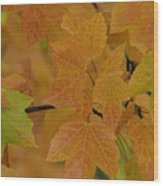 For Every Season There Is A Color Wood Print