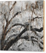 For The Grace Of The Beauty Of A Aged Tree Wood Print