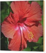 For The Love Of Hibiscus Wood Print