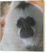For The Love Of Monkeys Wood Print