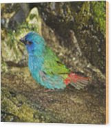 Forbes Parrot Finch Wood Print