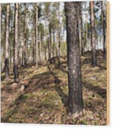 Forest Next Summer After A Fire Wood Print