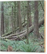 Forest And Ferns Wood Print
