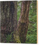 Forest At Camp Creek, Olympic National Forest, Washington, 2016 Wood Print