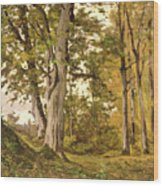 Forest At Fontainebleau Wood Print