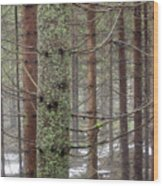 Forest At Winter Wood Print