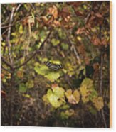 Forest Butterfly Wood Print