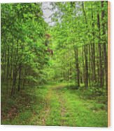 Forest Byway Wood Print