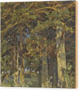 Forest Clearing Wood Print