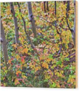 Forest Colors Wood Print