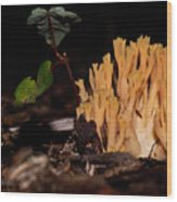 Forest Coral Fungi Wood Print