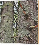Forest Corrosion Bark Wood Print