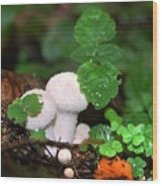 Forest Fairy Tale Wood Print