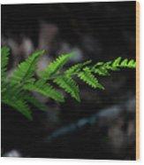 Forest Fern Wood Print