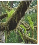 Forest Ferns Art Prints Fern Giclee Prints Baslee Troutman Wood Print