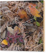 Forest Ferns Wood Print