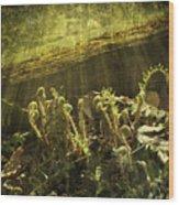 Forest Ferns Unfurling Wood Print