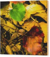 Forest Floor Wood Print