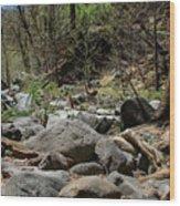 Forest Floor Near Oak Creek Wood Print