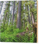 Forest Floor Of Hoh Rain Forest Wood Print