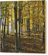Forest Floor One Wood Print