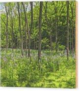 Forest Floor Dame's Rocket Wood Print