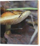 Forest Fungi Wood Print