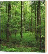 Forest Greenery Wood Print