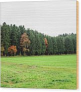 Forest In Bavaria Wood Print