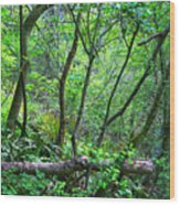 Forest In Hdr Wood Print