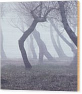 Forest In Mist Wood Print
