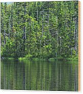 Forest Lake Wood Print
