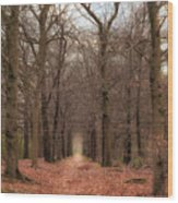 Forest Lane Near Maarsbergen Wood Print