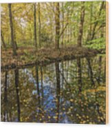 Forest Leaf Reflection Wood Print