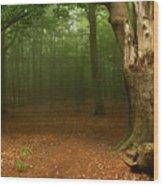 Forest Light 2 Wood Print